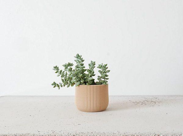 Lotus indoor planter