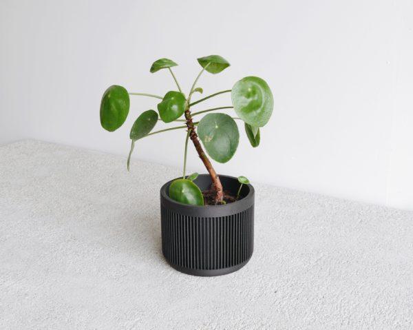 Black Japan indoor planter