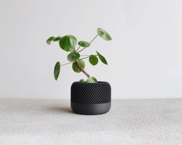 Black Apple indoor Planter