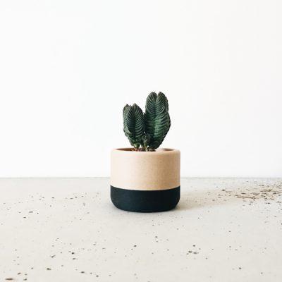 Indoor Planter ECOTOOL