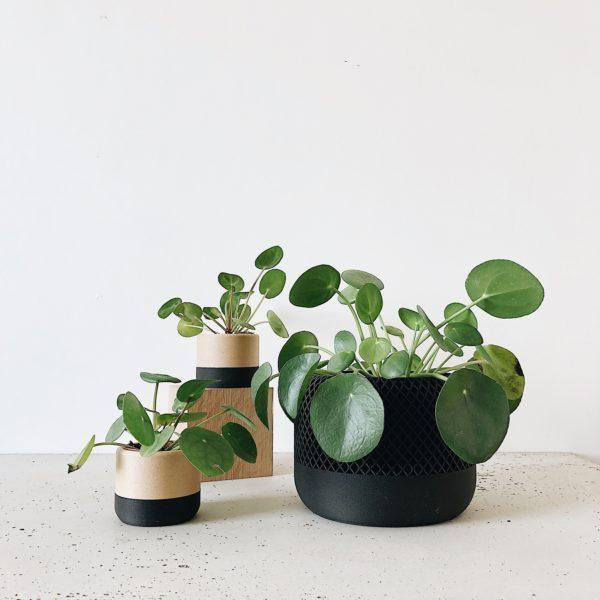 Black Indoor Planter - APPLE