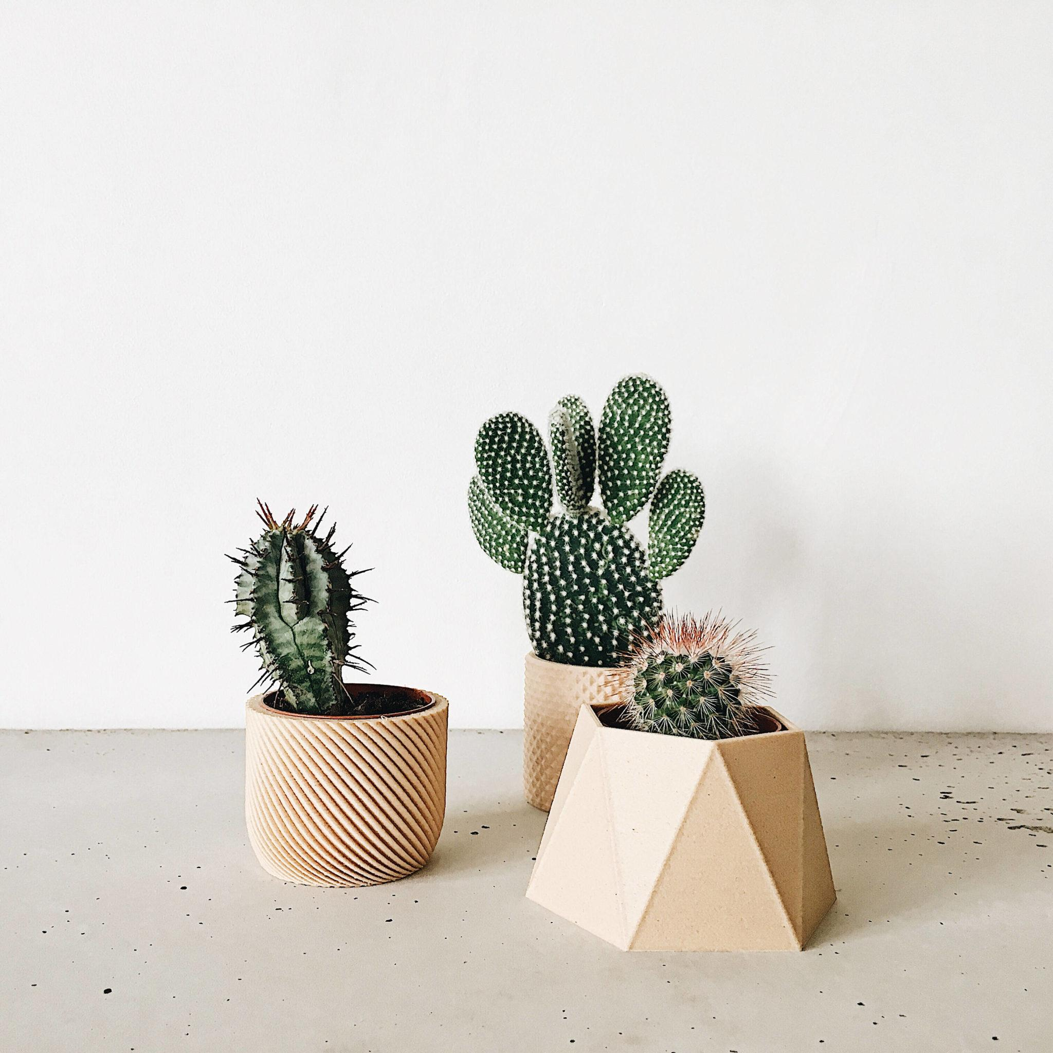 Pot Plante En Bois natural wood planters, planters - hima - minimum design