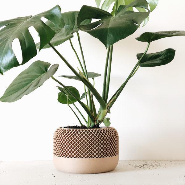 Large Indoor Planter APPLE