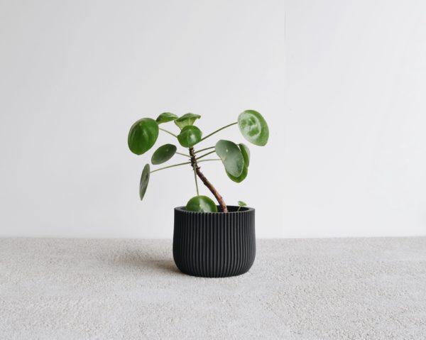 Black Lotus indoor planter